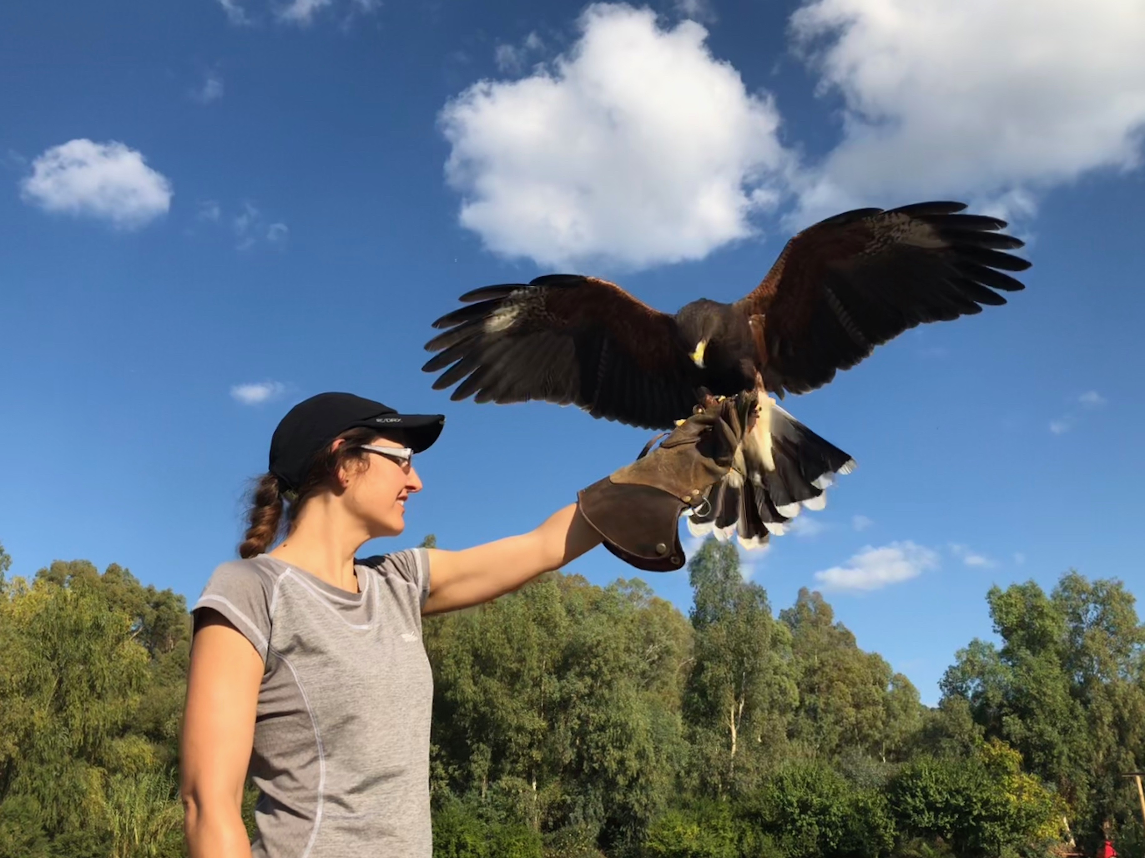 Skywings Falconry
